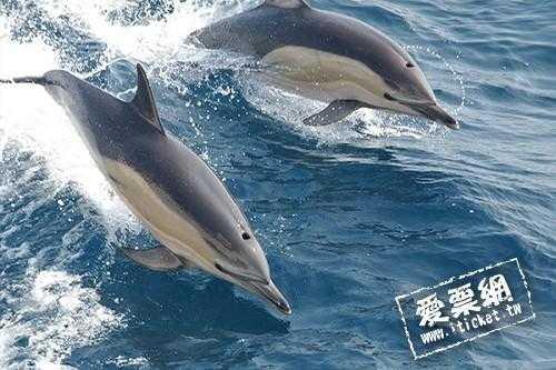 宜蘭烏石賞鯨+繞島