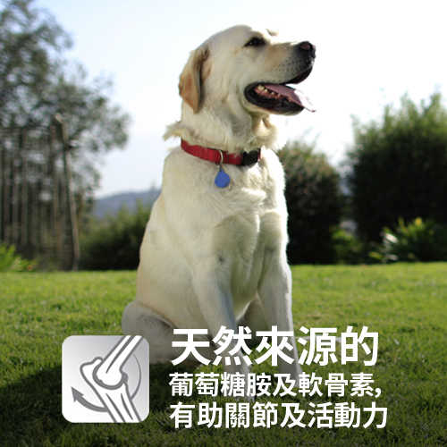 【買1送1】Hill's希爾思 幼犬 1歲以下 大型犬 (雞肉+燕麥)4KG(效期2019.5.1)