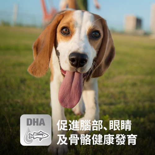 【買1送1】Hill's希爾思 幼犬 1歲以下 均衡發育15KG(效期2019.51)
